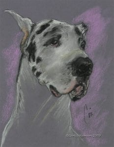 Great Dane: Bodhi's Mystique