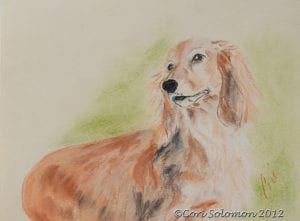 Long Haired Dachshund - For Sale