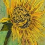 Sunflower Pastel Drawing by Cori Solomon
