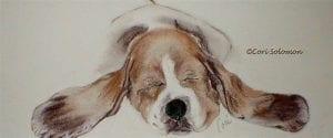 Basset Hound by Cori Solomon