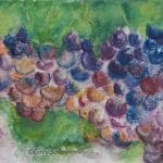 Grape Clusters by Cori Solomon