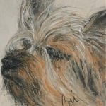 Silky Terrier Art by Cori Solomon