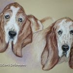 Basset Hound Pastel Drawing