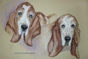 Basset Hound Pastel Drawing