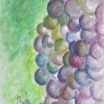 Grape Cluster by Cori Solomon