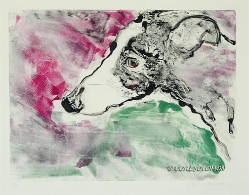 Greyhound: Cyrus – For Sale