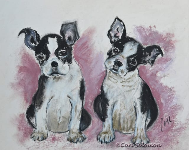 Boston Terriers: Puppy Puppy – For Sale