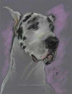 Bodhi's Mystique Great Dane By Cori Solomon