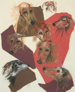 Saluki Faces by Cori Solomon