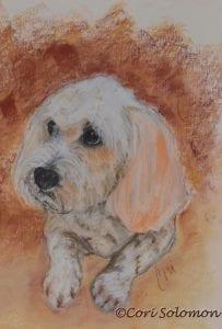 Mixed breed Dog by Cori Solomon