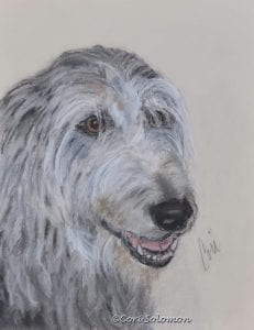 Scottish Deerhound Drawing