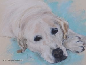 Miley Labrador Art by Cori Solomon