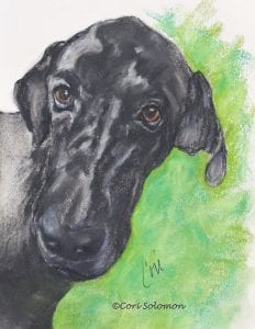 Black Great Dane Drawing