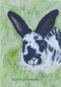 Black and White Bunny Rabbit