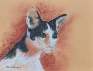 Oriental Shorthair Cat by Cori Solomon