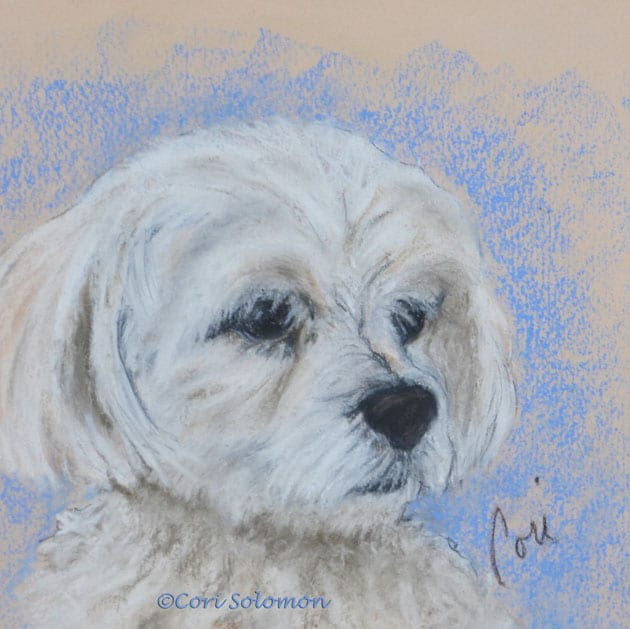 Maltese Dog Art by Cori Solomon