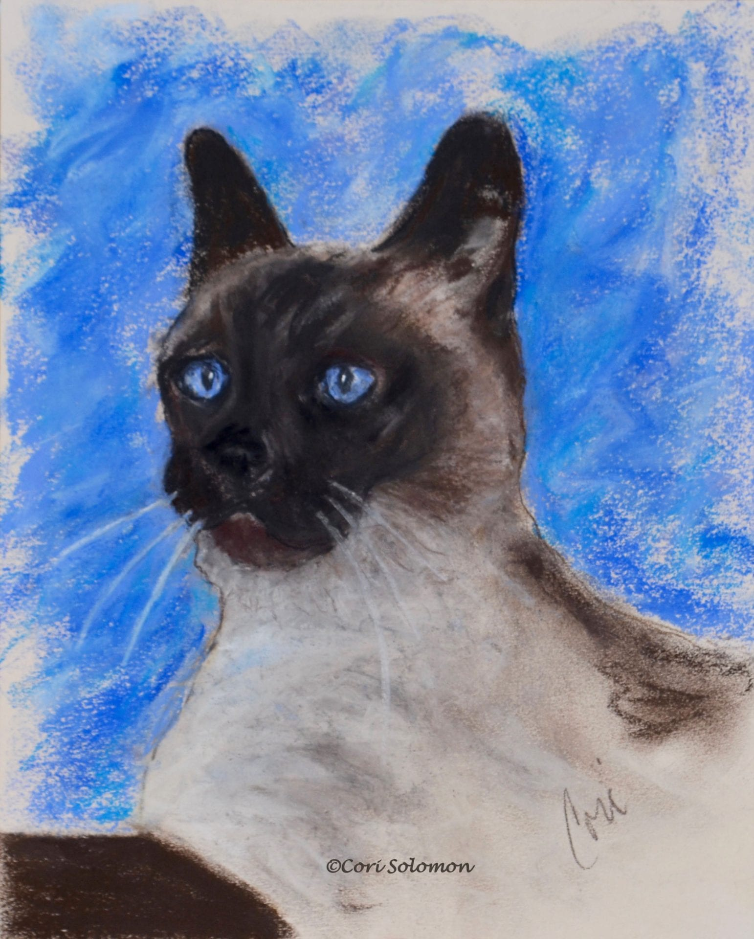 Seal Point Siamese Cat: A Spark of Life – For Sale