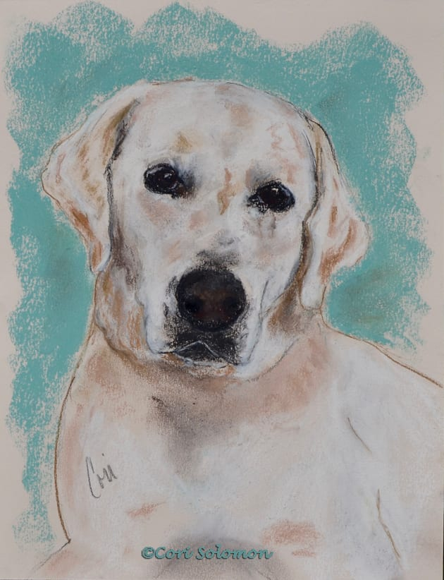 Yellow Labrador Retriever: Biscuit
