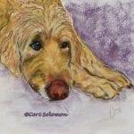 Goldendoodle Art by Cori Solomon