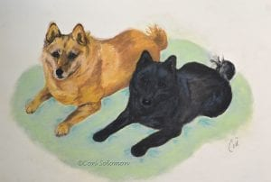 Schipperke Art by Cori Solomon