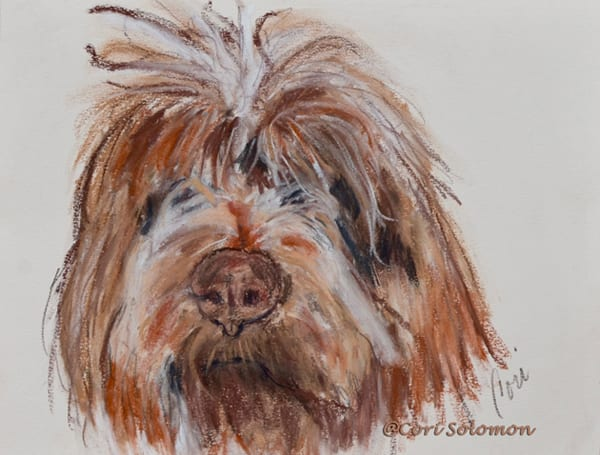 Wirehaired Pointing Griffon By Cori Solomon