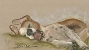 Sleeping Dog Drawing by Cori Solomon