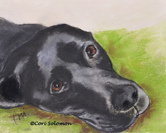 Black Labrador Retriever by Cori Solomon