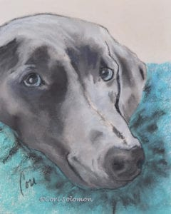 Weimaraner - Vegas the Lucky Rescue Dog