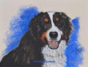 Bernese Mountain Dog by Cori Solomon