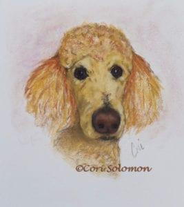 Apricot Standard Poodle by Cori Solomon