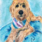 Goldendoodle by Cori Solomon