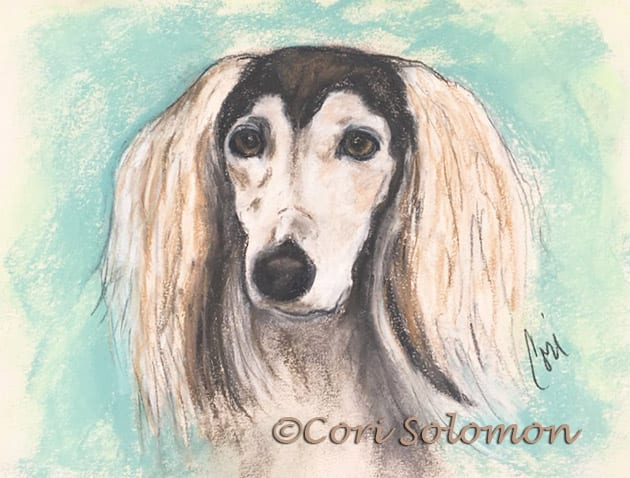 Grizzle Saluki Drawing by Cori Solomon