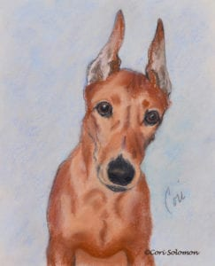 German Pinscher by Cori Solomon