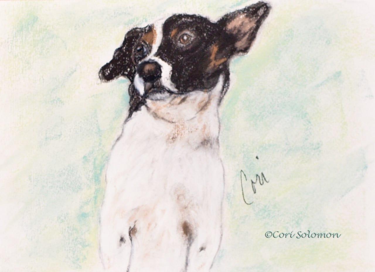 Sport: Mixed Breed Dog
