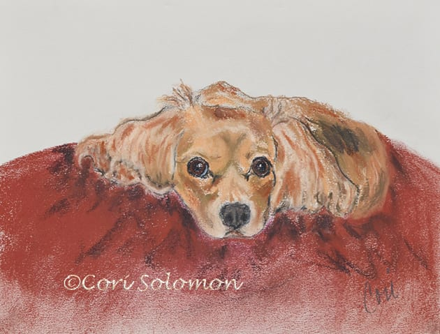 King Charles Cavalier Spaniel, Ruby by Cori Solomon