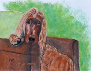 Irish Setter by Cori Solomon