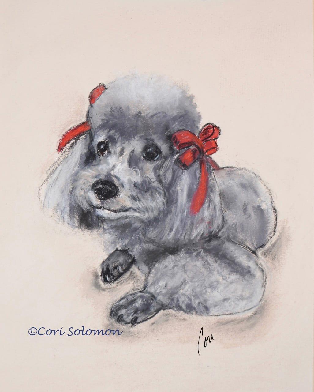 Gray Toy Poodle by Cori Solomon