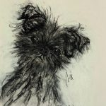 Affenpinscher Devil Wears Black By Cori Solomon