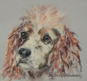 Cocker Spaniel The Eyes Tell It All By Cori Solomon