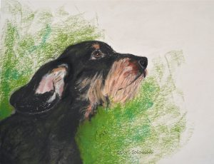 Finn Wire Haired Dachshund by Cori Solomon