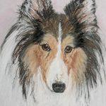 Shetland Sheepdog Tooney by Cori Soloomon
