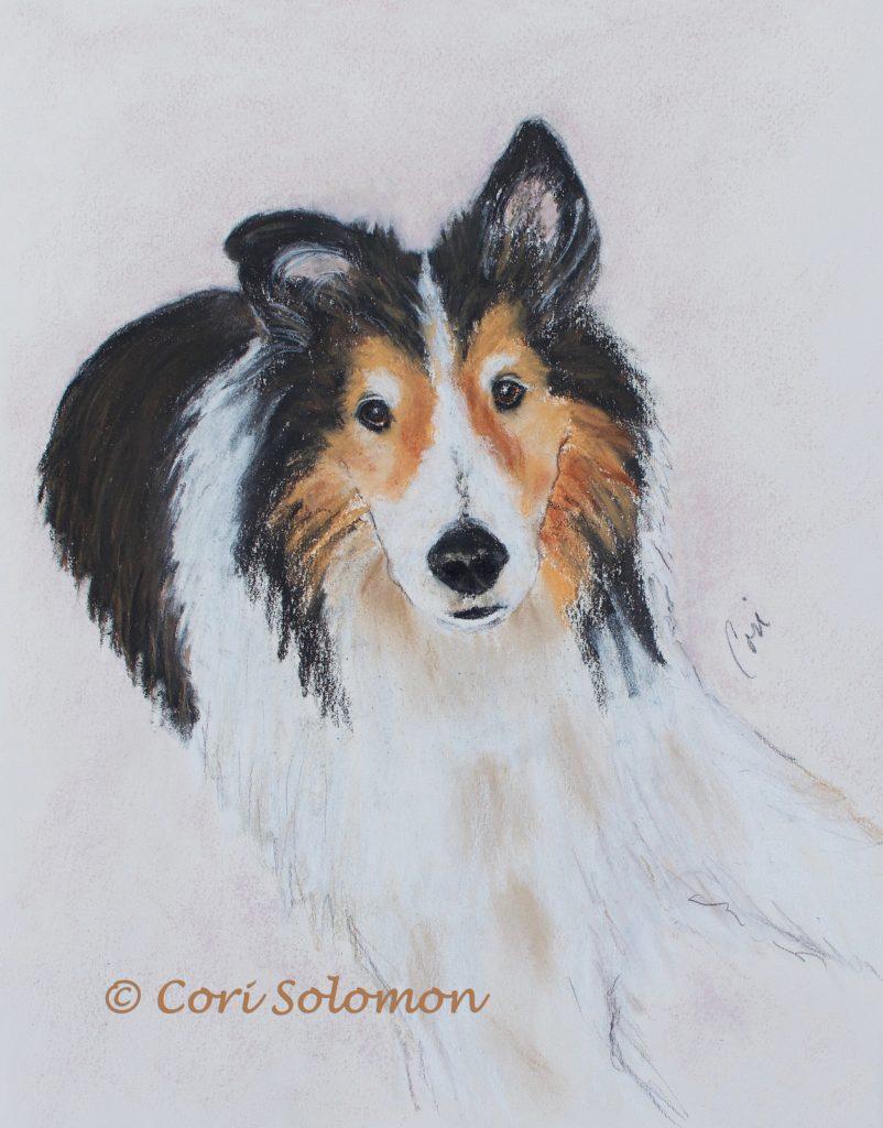 Shetland Sheepdog Pastel Drawing Tormey by Cori Solomon