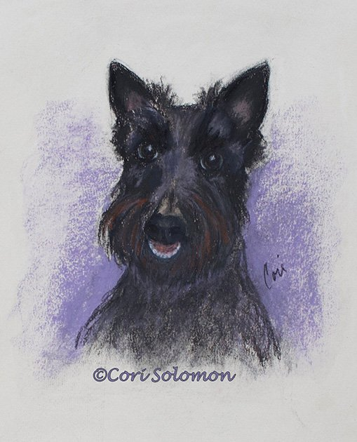 Scottish Terrier: Muffin