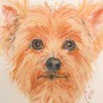 Yorkshire Terrier by Cori Solomon
