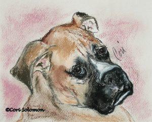 Boxer by Cori Solomon